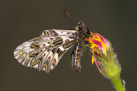 Tiny butterflies feeding on small yellow and pink flowers.