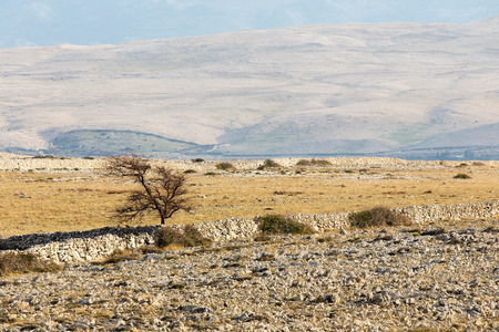 Desert landscape with lonely tree ond rocks on island Pag, Croatia