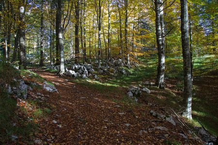 Dirt Forest Path in autumn colors with falling foliage Imagens