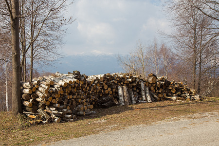 Stacked Firewood by the Forest Road - Piles of wood - firewood