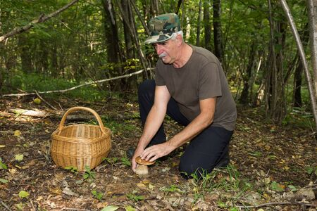 Old Man picking Porcini mushrooms (boletus edulis) in forest