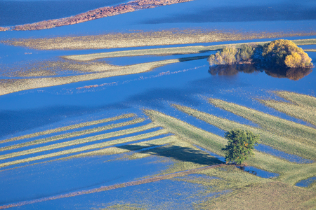 Flood in Autumn - Flooded fields with Trees of Planinsko polje, Slovenia 스톡 콘텐츠