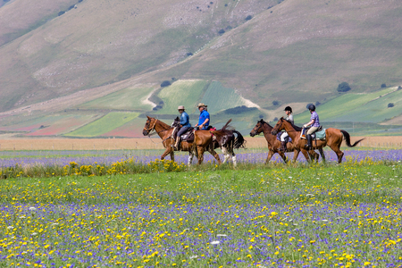 Group of horse riders riding on Wheat and flower field. Side view on the surface of the fields in red, yellow, blue and green colors. 報道画像