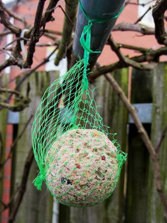 fat bird: Bird food, fat globule, winter.