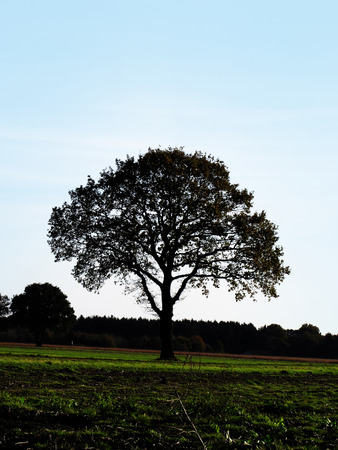 crystaline: Solitary tree against the sky Stock Photo