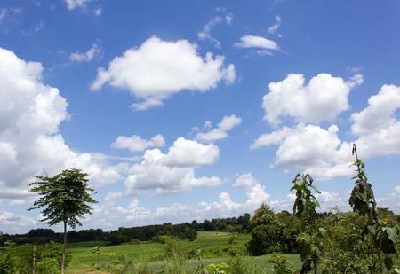 adn: nubes en el cielo azul bosque adn. Foto de archivo