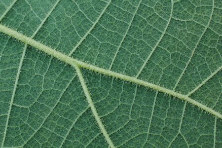 Close-up of green leaf, green leaf texture background.