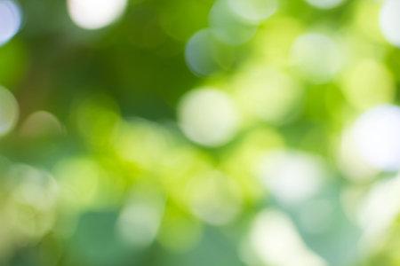 자연 녹색 흐리게 및 bokeh 배경, 추상적 인 배경.