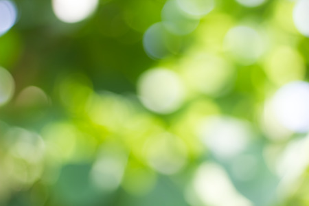 foliage: Natural green blurred and bokeh background,Abstract backgrounds. Stock Photo