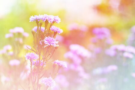 Beautiful flowers background  with color filters, Soft focus