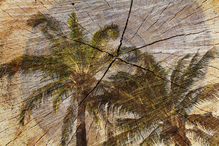 Double exposure of Coconut tree and Cut tree trunk. nature background Imagens