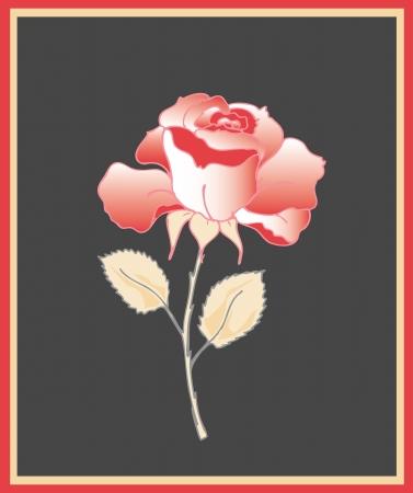 Beautiful red rose Vector