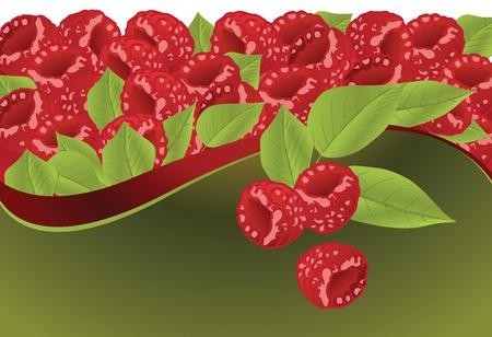 fresh raspberry fruit Vector