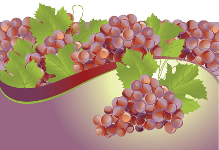 fruitful: wine grape vector