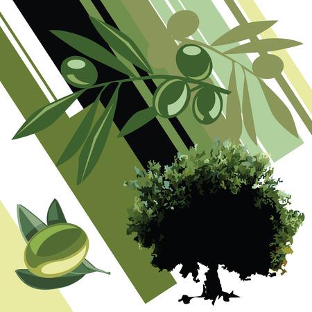 aceite de oliva virgen extra: Vector de oliva