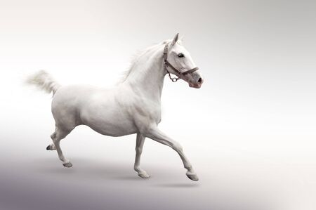 photomanipulation: Isolated picture of white horse in motion
