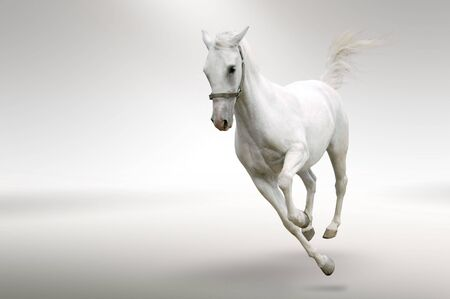 racing background: Isolated picture of white horse in motion