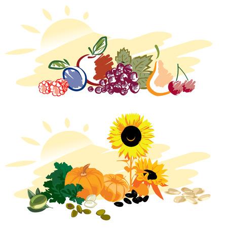 pumpkin seeds: Set of fruits and vegetables Illustration