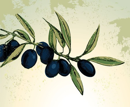 botella de aceite de oliva: Rama con aceitunas negras