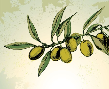 olive leaves: Branch with green olives