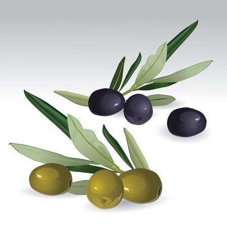 healthiness: Aceitunas negras y verdes aislados  Vectores