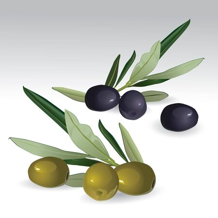 Black and green olives isolated Vector