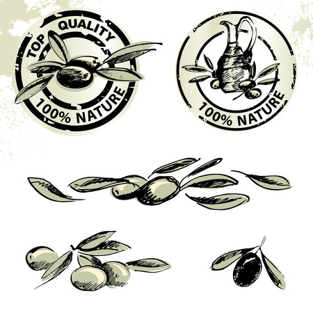 foglie ulivo: Etichette di olio d'oliva e illustrazioni d'oliva Vettoriali