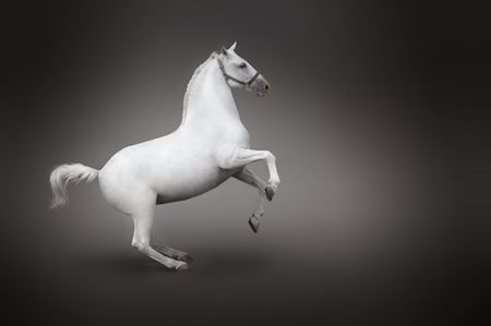 rearing: White horse rearing side view isolated