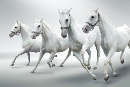 horse carriage: White horses