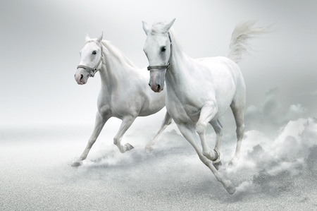 horse and carriage: White horses
