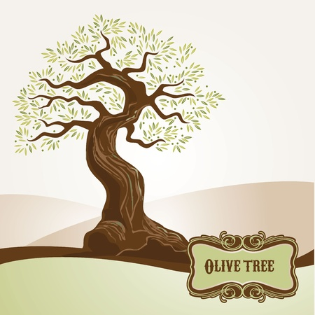 olive tree: Old olive tree  Illustration