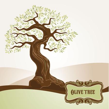 hoja de olivo: Viejo olivo  Vectores