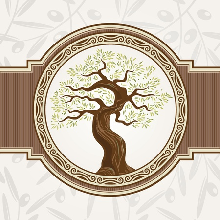olive tree: Olive tree  Illustration