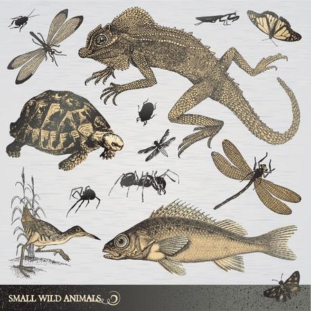 small reptiles: Raccolta di piccoli animali selvatici
