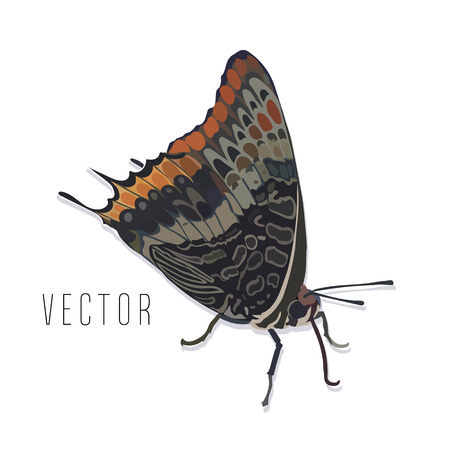 Realistic butterfly vector illustration. Single sitting butterfly.