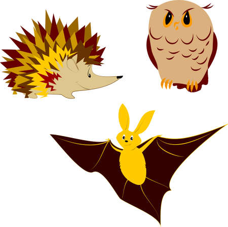 Nocturnal animals Vector