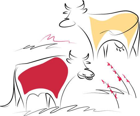 Kuh und Stier Illustration