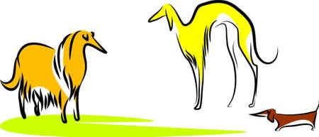 Three dogs Illustration