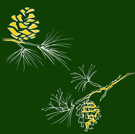 pine cone: Coni Vettoriali