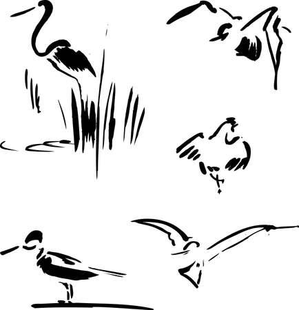 Calligraphy bird set