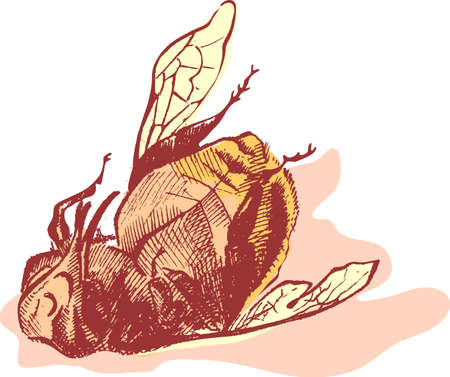 dead animal: Bumblebee