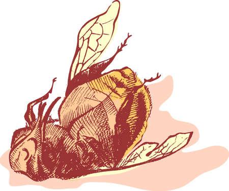 tarsus: Bumblebee