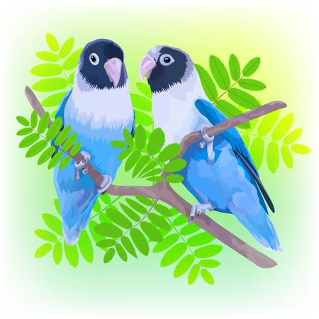 Pair of blue lovebirds.  illustration of two small parrots Illustration