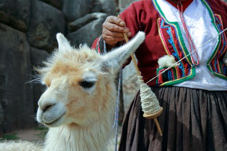 incan: Lama with Peruvian woman spinning yarn in the background and Incan ruins. (Peru) Stock Photo