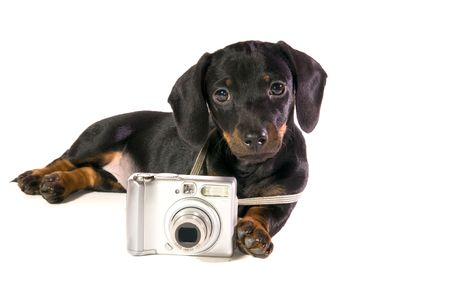 Black dog Lays with a camera on white background isolated close up photo