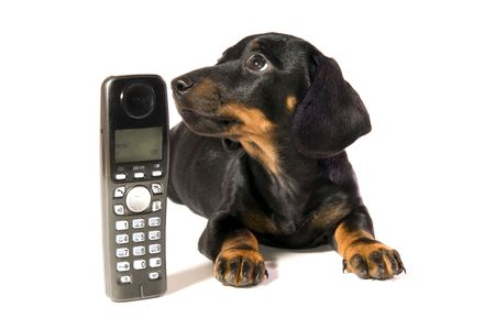 lays: Black dog Lays with a black telephone on white background isolated