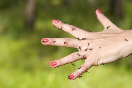 separately: A plenty of ants on a female hand, fingers separately, on a green background Stock Photo