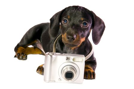 Black dog Lays with a camera on white background isolated close up Stock Photo - 5915603