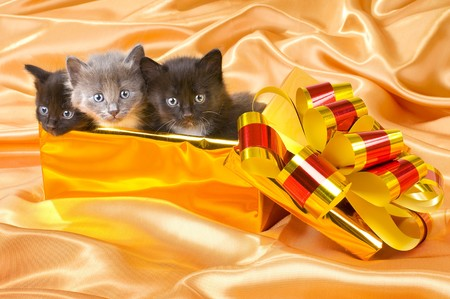 three beautiful fluffy little kittens,in gold box-gift on gold background-cloth photo