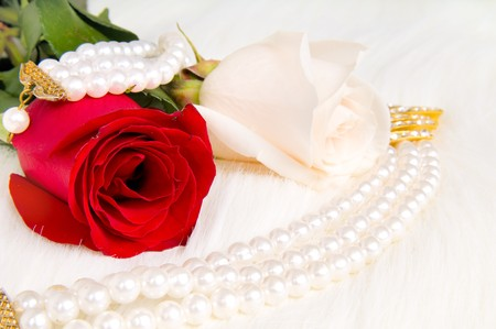beautiful red rose and pearl necklace , lay on white to fur photo